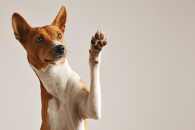 contabilidade para clínica veterinária - cachorro dando tchau